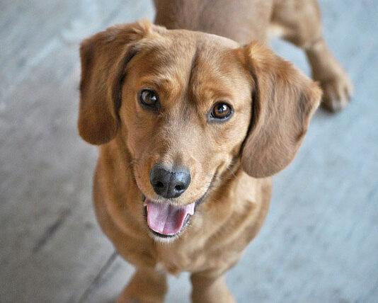 Ubranko dla psiaka – porady przed wizytą w sklepie